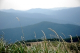 bieszczady trawa