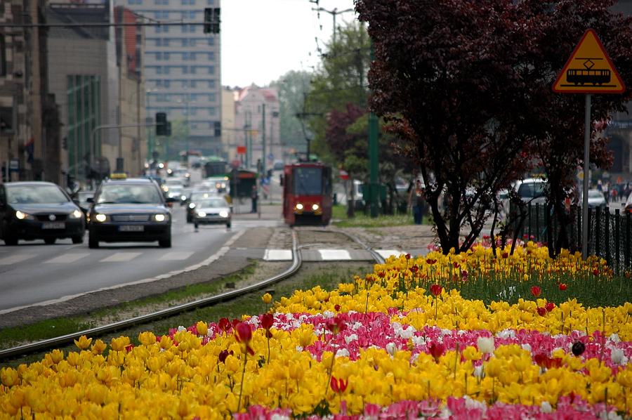 kwiaty sw marcin