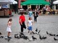 golebie stary rynek