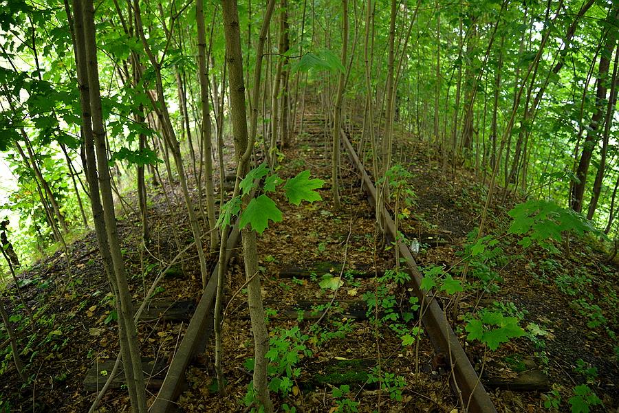 zarośnięte tory kolejowe